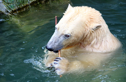 Polar bear luxury: tooth brush