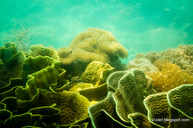 Pulau Putri Ikan6-2358rw