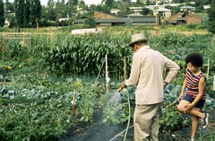 Gardening in p-patch, 1990
