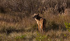 2016-02-06 - Anuhuac Wildlife Refuge-0173