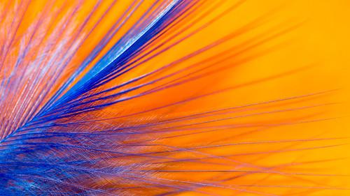 Catchy Colors: Orange & Blue