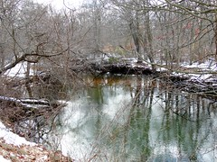 Mill Pond - February 11 2016 (26)