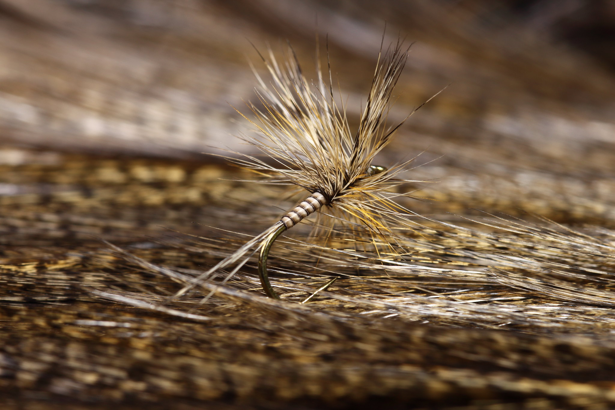 Quilled Coq de Leon Dry Fly