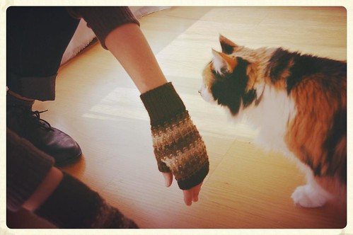 #tbt that moment when Snickers joined us during the Purlish photo shoot #bluepeninsula #knit #knitting #knittersofinstagram #knitstagram #bonniesennott #mykitty