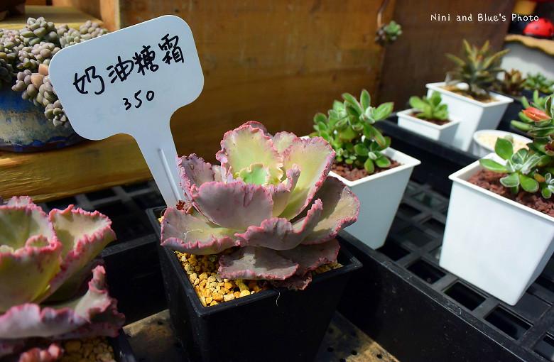 舞花肉園多肉植物12