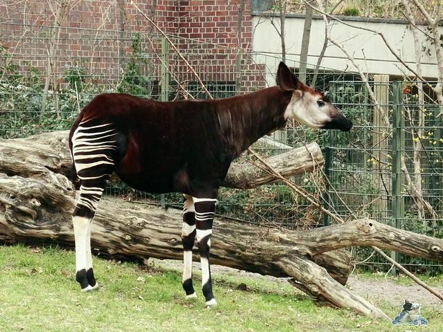 Zoo Berlin 18.03.2016  055