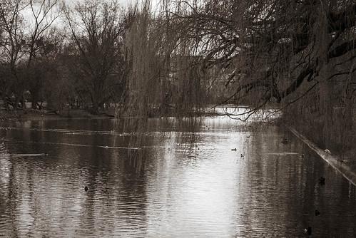 Lake View Black and White