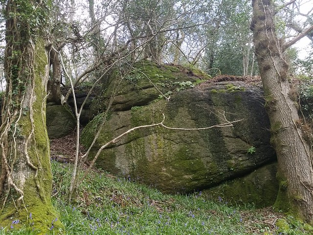 unnamed outcrops in Shaptor Woods