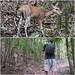 VI Deer shot! by daveynin