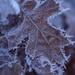 More frost D75_4197 by steve bond Photog