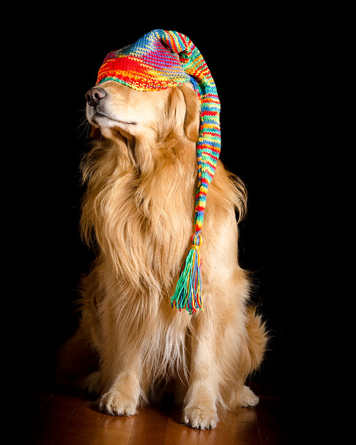 Dog in Stocking Cap