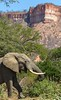 Elephant in front of Chilojo Cliffs