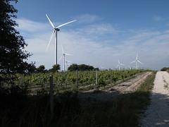 Wind - Wine