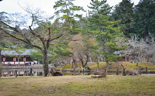 Nara-Park