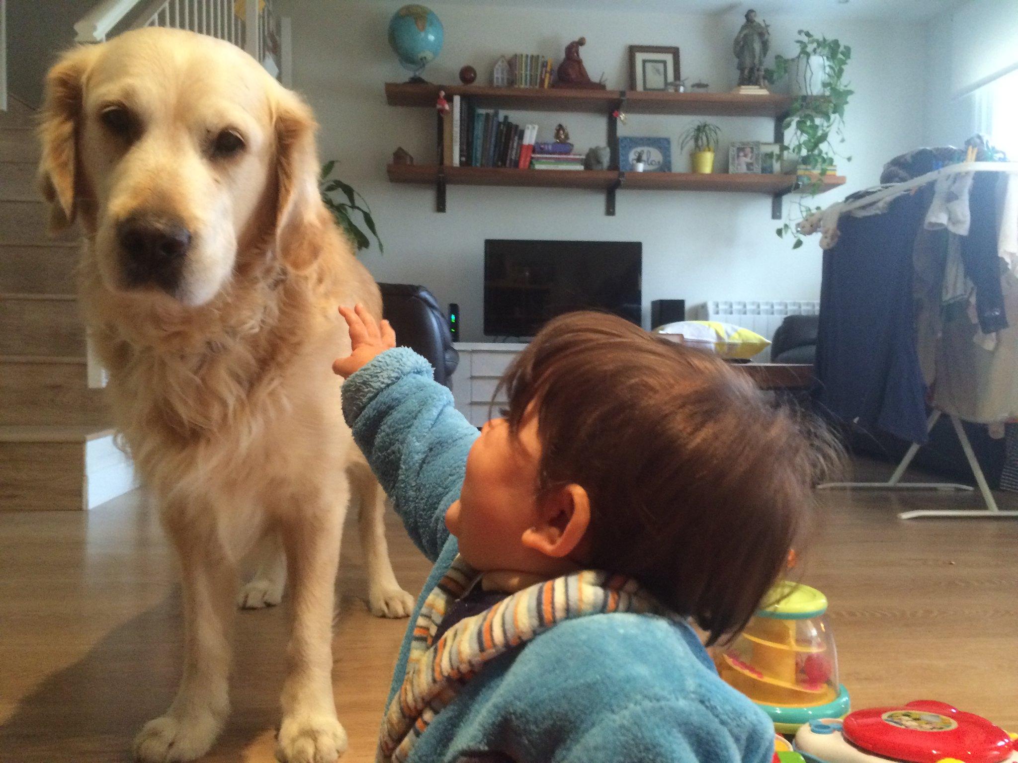 Jugando con los cachorros