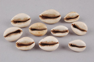 cowrie- shells