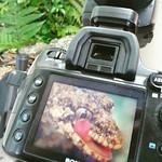 Imagine de Rainbow Springs lângă Rotorua. square squareformat juno iphoneography instagramapp uploaded:by=instagram