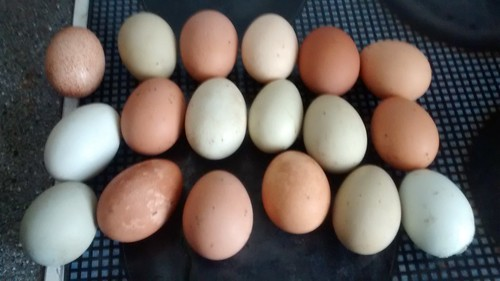 eggs April 2016