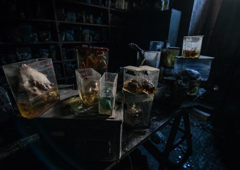 驚魂比利時「廢棄獸醫學院」福馬林的怪誕美學23