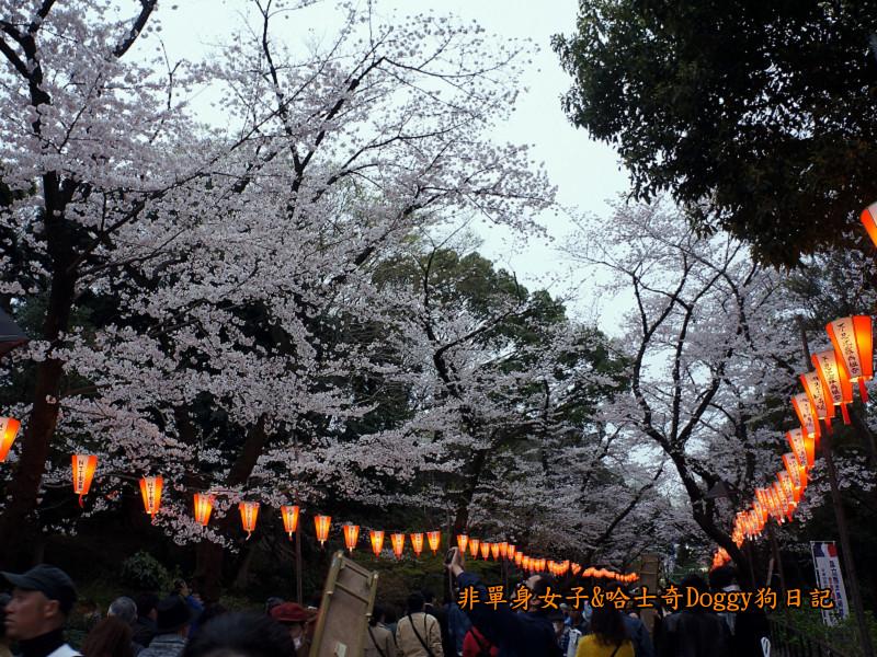 日本東京上野恩賜公園櫻花03