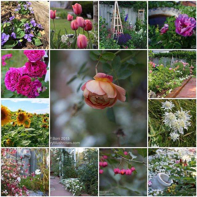 2015 Flora