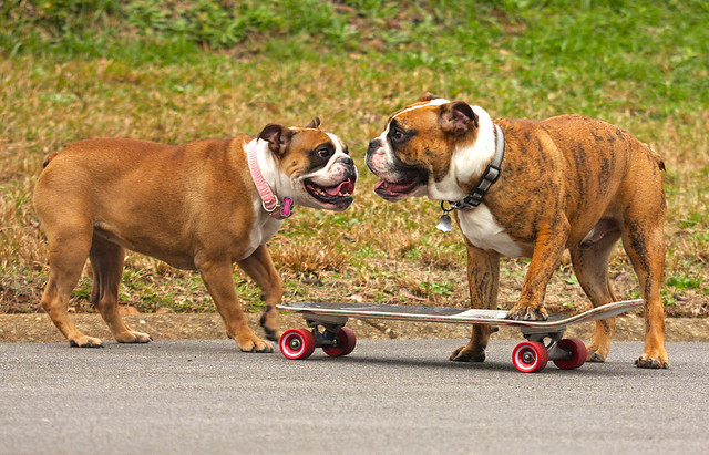 Rosie telling Brutus what a good skateboarder he is