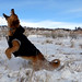 MIN 299_Snow-Catching Dog_Left