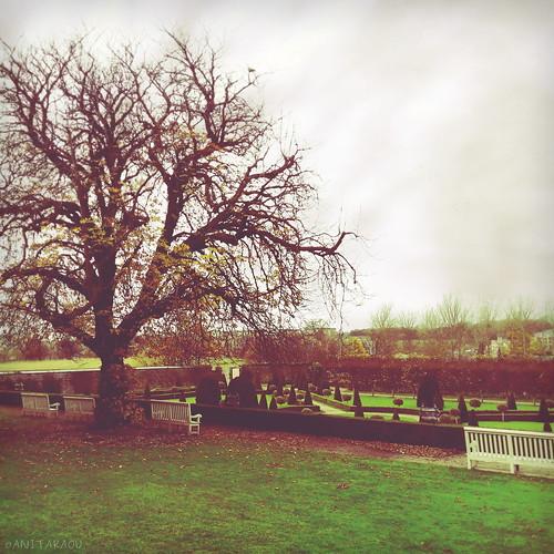 The tree | Anita