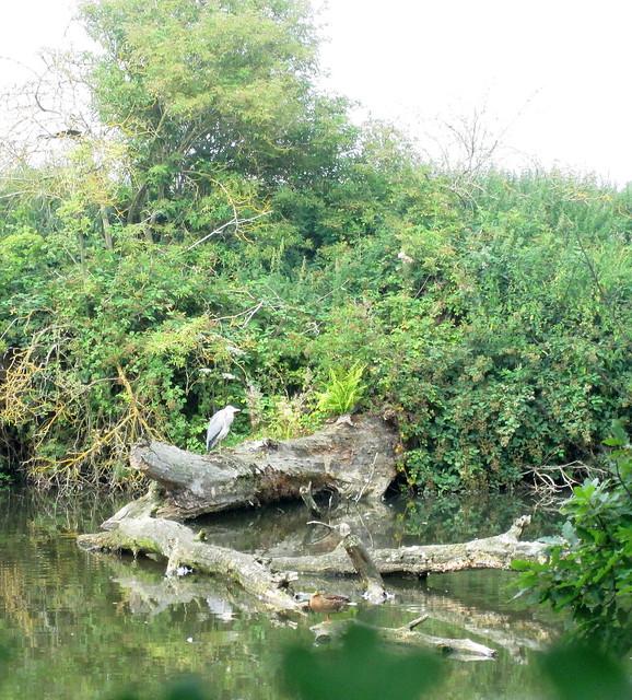 Mount Grace Priory Heron