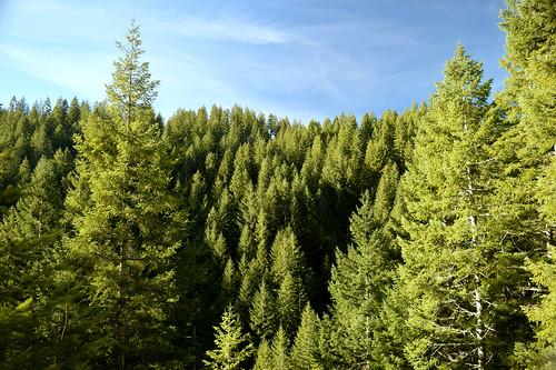 Wolf Creek Trestle hike - Tillamook State forest, Oregon