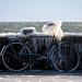 Copenhagen Bikehaven by Mellbin - Bike Cycle Bicycle - 2016 - 00xx by Franz-Michael S. Mellbin