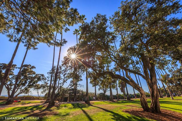 A Sunny Day at Palisades Park