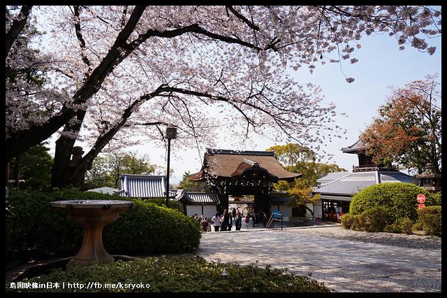 日本京都_大谷本廟 櫻.05