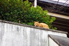 Today's Cat@2016-03-17