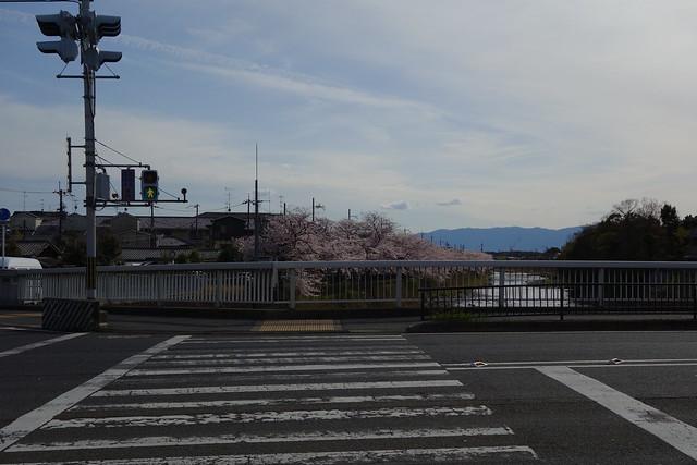 2016/04 松ヶ崎橋の横断歩道