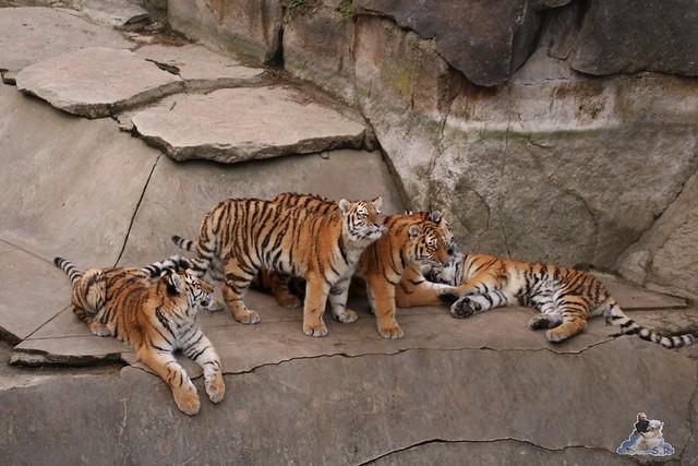 Tierpark Berlin 25.12.2051   153