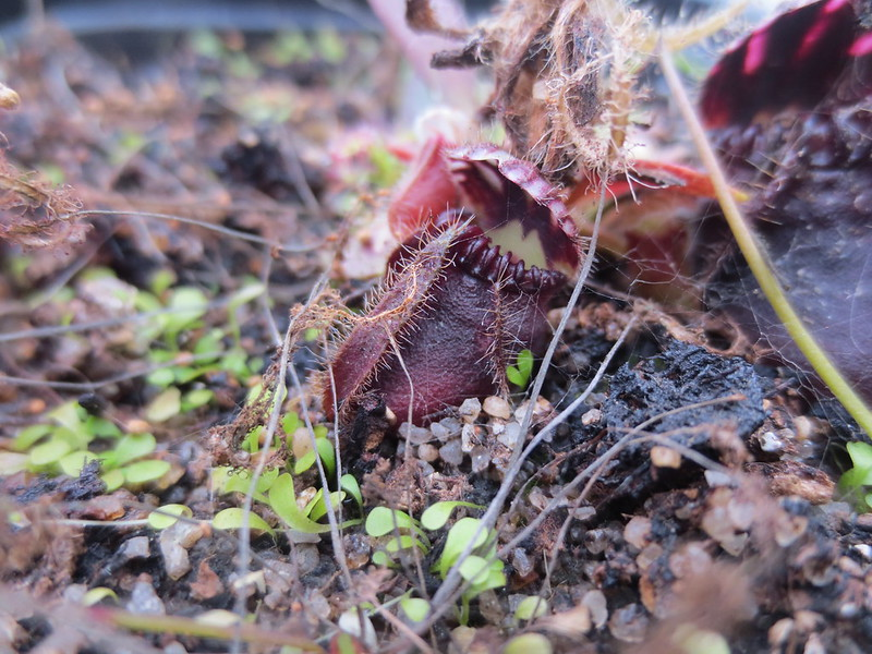 Plantas.werds.2012-2013 - Página 8 23898974472_82881eb100_c