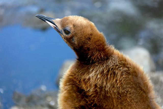 2014 12 7 Antarctica Fortuna and Stromness IMG_8339