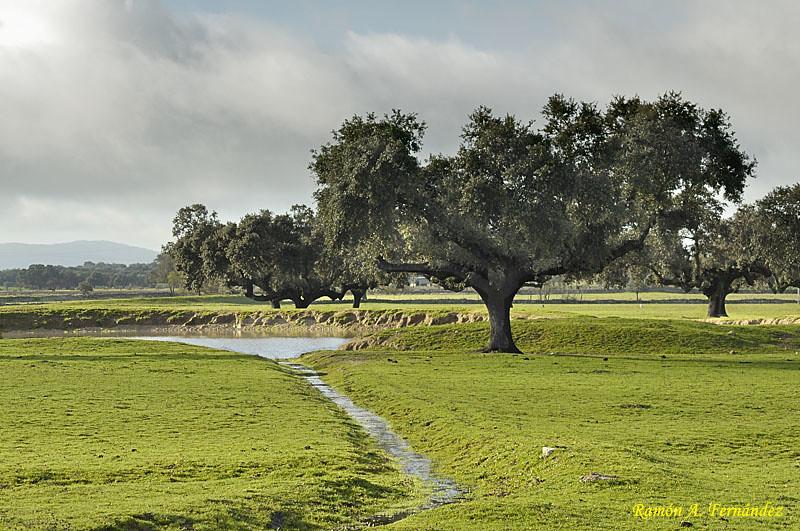 Agua en la dehesa, Oliva de Plasencia