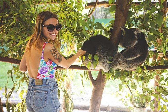 koalat