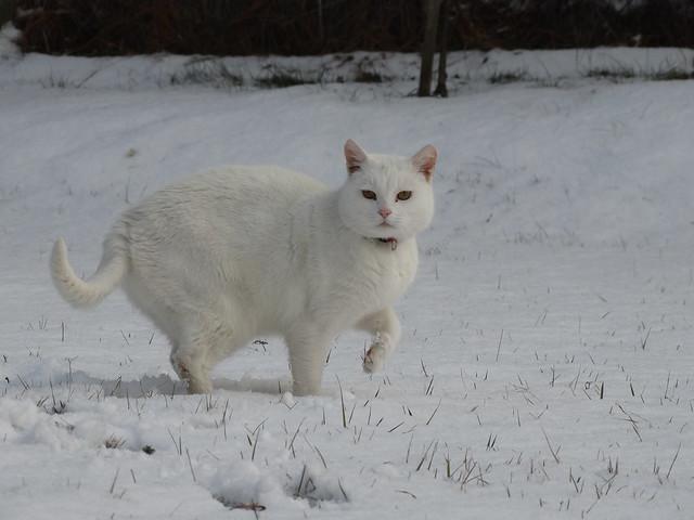 Kefír a hóban