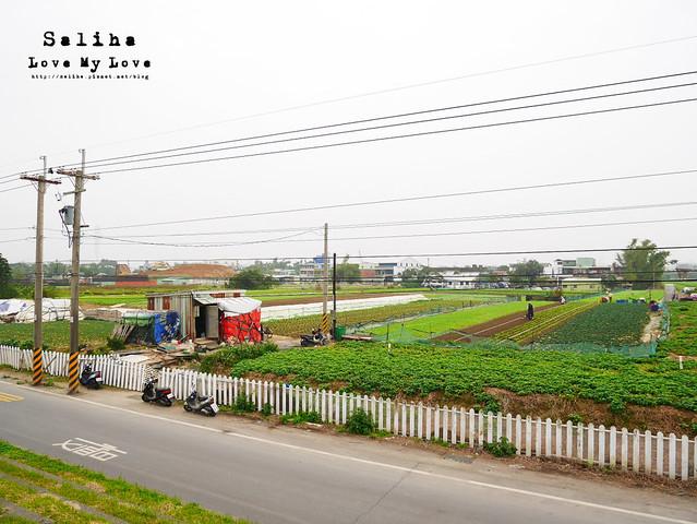 社子島溼地水鳥自行車道 (39)