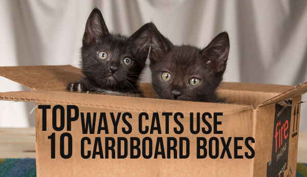 cats-use-cardboard