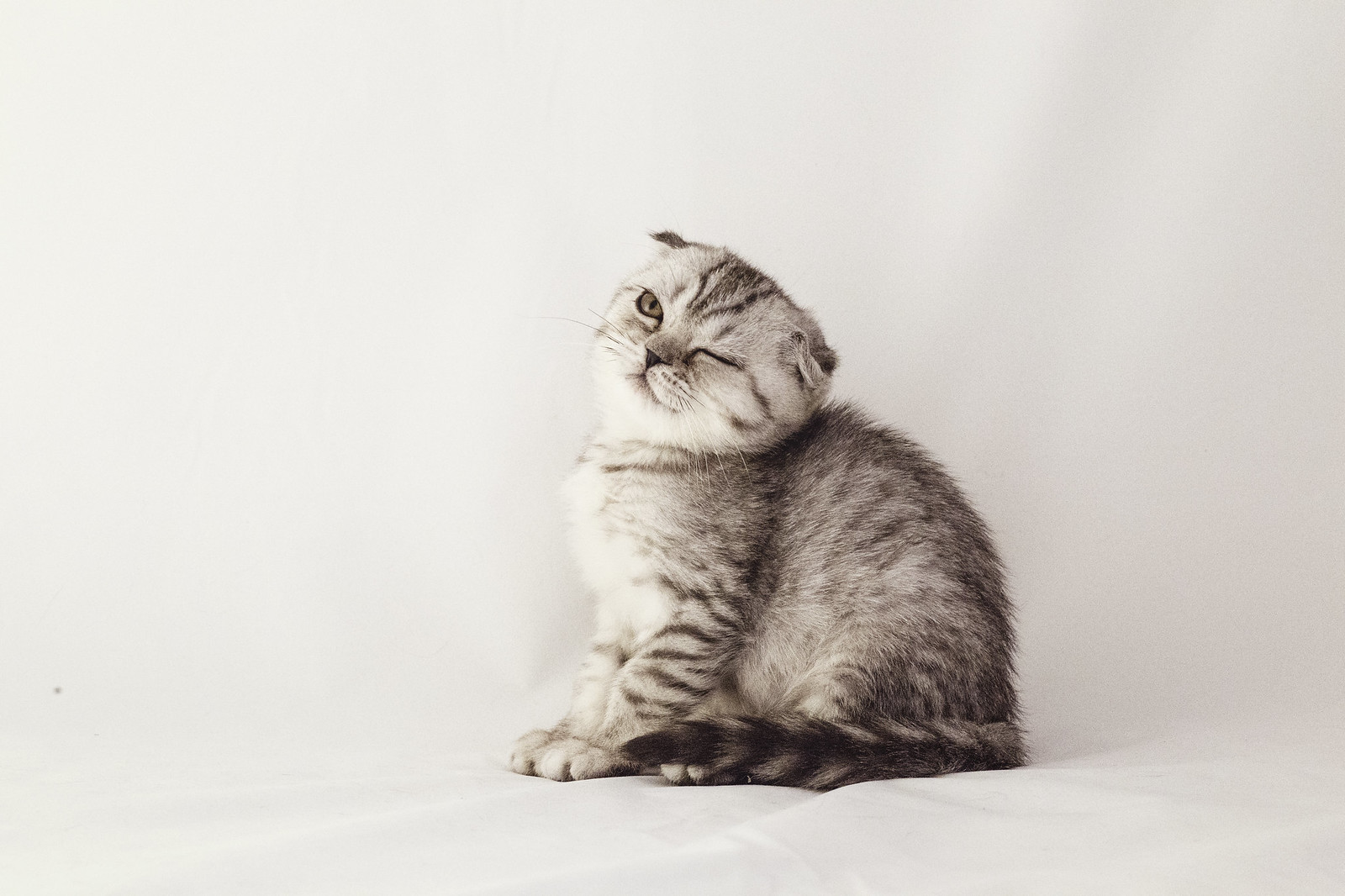 Вы коты мои коты