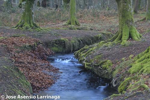 Parque Natural de Gorbeia  #DePaseoConLarri #Flickr -3056