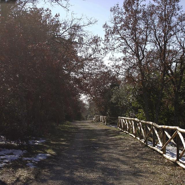 Bosco delle Pianelle