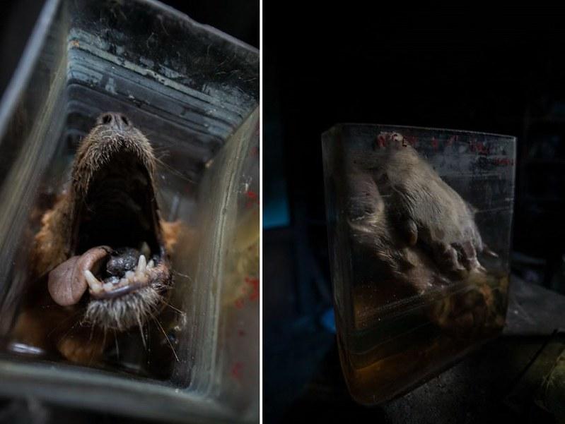 驚魂比利時「廢棄獸醫學院」福馬林的怪誕美學15