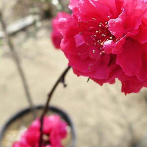 花のあるところ