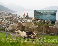 Weggis on Lake Lucerne, Central Switzerland