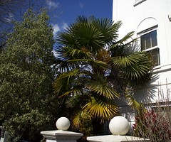 Beautiful Sheltered Palm, Torquay